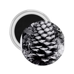 Pinecone Spiral 2 25  Magnets