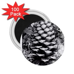 Pinecone Spiral 2 25  Magnets (100 Pack)