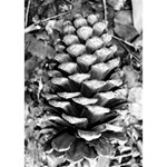 Pinecone Spiral THANK YOU 3D Greeting Card (7x5)  Inside