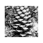 Pinecone Spiral THANK YOU 3D Greeting Card (7x5)  Back