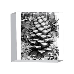 Pinecone Spiral 4 x 4  Acrylic Photo Blocks