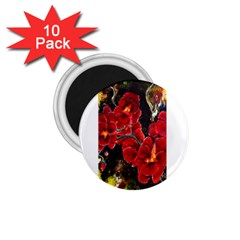 Red Orchids 1 75  Magnets (10 Pack)