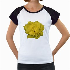 Isolated Yellow Rose Photo Women s Cap Sleeve T