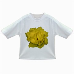 Isolated Yellow Rose Photo Infant/Toddler T-Shirts