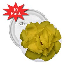 Isolated Yellow Rose Photo 2 25  Buttons (10 Pack)