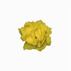 Isolated Yellow Rose Photo Collage 12  x 18