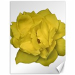 Isolated Yellow Rose Photo Canvas 36  x 48   48 x36 Canvas - 1