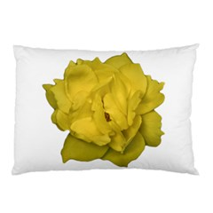 Isolated Yellow Rose Photo Pillow Cases