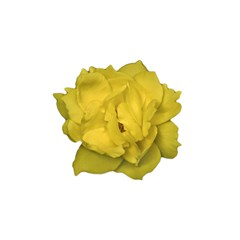 Isolated Yellow Rose Photo Shower Curtain 48  x 72  (Small)