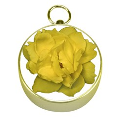 Isolated Yellow Rose Photo Gold Compasses