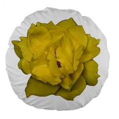 Isolated Yellow Rose Photo Large 18  Premium Flano Round Cushions