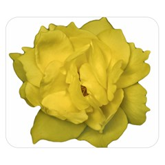 Isolated Yellow Rose Photo Double Sided Flano Blanket (small)