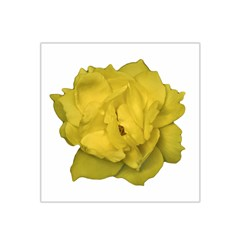 Isolated Yellow Rose Photo Satin Bandana Scarf