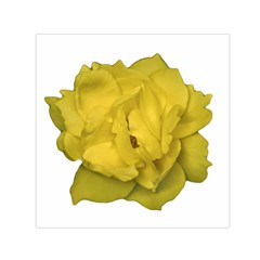 Isolated Yellow Rose Photo Small Satin Scarf (Square)