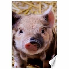 Sweet Piglet Canvas 24  X 36
