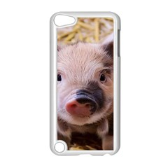 Sweet Piglet Apple Ipod Touch 5 Case (white)