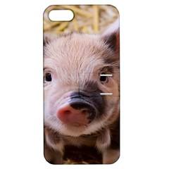Sweet Piglet Apple Iphone 5 Hardshell Case With Stand