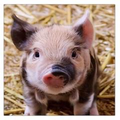 Sweet Piglet Large Satin Scarf (Square)