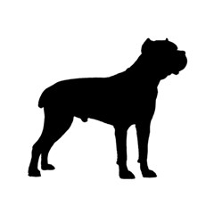 Cane Corso Silo Black Magic Photo Cubes