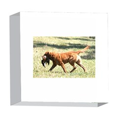 Chesapeake Bay Retriever Retrieving 5  x 5  Acrylic Photo Blocks