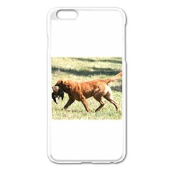 Chesapeake Bay Retriever Retrieving Apple iPhone 6 Plus Enamel White Case
