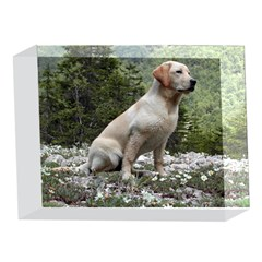Yellow Lab Sitting 5 x 7  Acrylic Photo Blocks