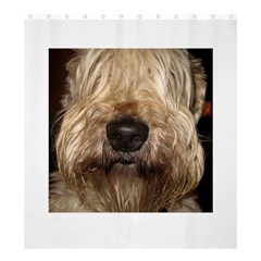 Wheaten Shower Curtain 66  x 72  (Large)