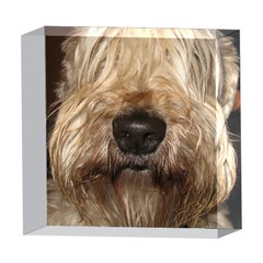 Wheaten 5  x 5  Acrylic Photo Blocks
