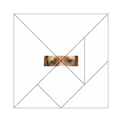 Vizsla Eyes Acrylic Tangram Puzzle (6  x 6 )
