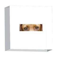 Vizsla Eyes 5  x 5  Acrylic Photo Blocks