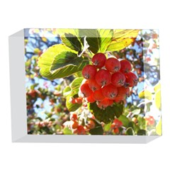 Rowan 5 x 7  Acrylic Photo Blocks