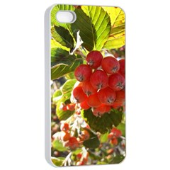 Rowan Apple iPhone 4/4s Seamless Case (White)