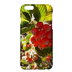 Rowan Apple iPhone 6 Plus Hardshell Case