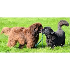 2 Newfies YOU ARE INVITED 3D Greeting Card (8x4)
