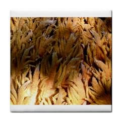 Sago Palm Face Towel