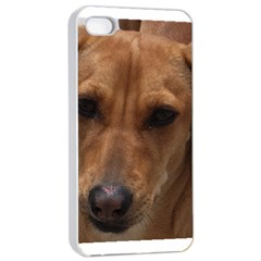 Dachshund Apple iPhone 4/4s Seamless Case (White)