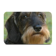 Wirehaired Dachshund Plate Mats