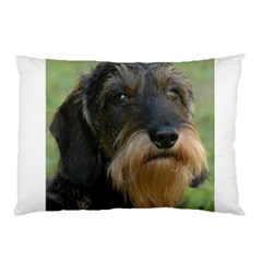 Wirehaired Dachshund Pillow Cases