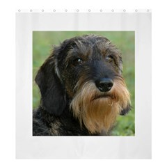 Wirehaired Dachshund Shower Curtain 66  x 72  (Large)