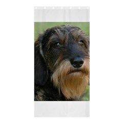 Wirehaired Dachshund Shower Curtain 36  x 72  (Stall)