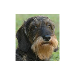 Wirehaired Dachshund Shower Curtain 48  x 72  (Small)