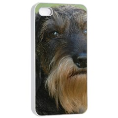 Wirehaired Dachshund Apple iPhone 4/4s Seamless Case (White)