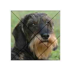 Wirehaired Dachshund Acrylic Tangram Puzzle (4  x 4 )