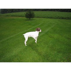 German Shorthair Pointer Full Magic Photo Cubes