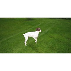German Shorthair Pointer Full YOU ARE INVITED 3D Greeting Card (8x4)