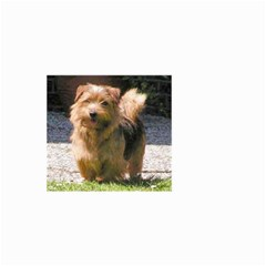 Norfolk Terrier Full Small Garden Flag (Two Sides)