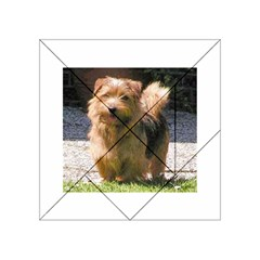 Norfolk Terrier Full Acrylic Tangram Puzzle (4  x 4 )