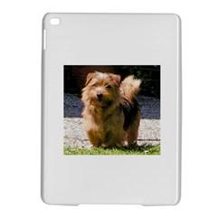 Norfolk Terrier Full iPad Air 2 Hardshell Cases