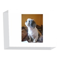 Shih Tzu Sitting 5 x 7  Acrylic Photo Blocks