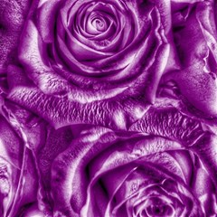 Gorgeous Roses,purple  Magic Photo Cubes